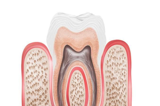 canal do dente
